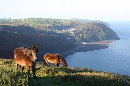 horses countisbury hill